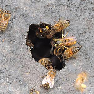 Bienen Klexikon Das Freie Kinderlexikon