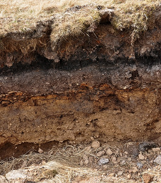 Datei:Layers in soil on Dartmoor.jpg