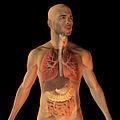 Respiratory function by Bryan Brandenburg.jpg